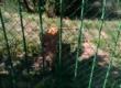 zoo (4)